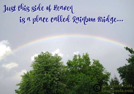 Just this side of Heaven is a place called Rainbow Bridge