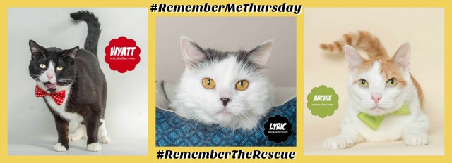 Shelter cats #RememberMeThursday