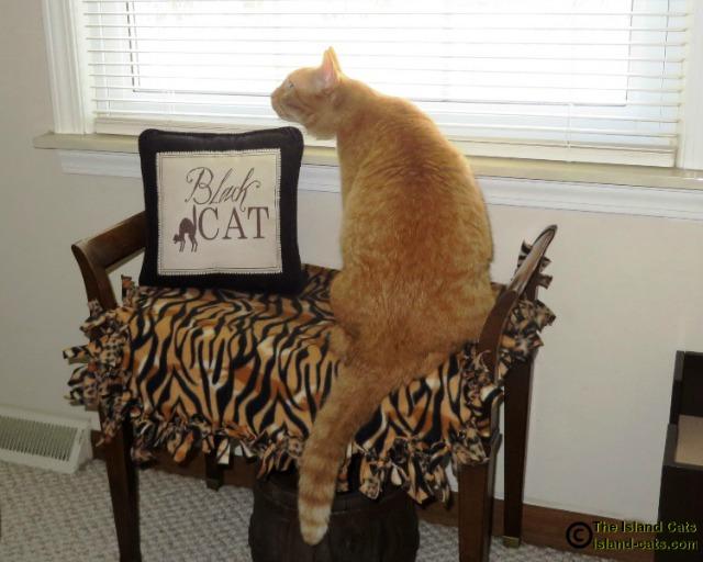 Where's the orange cat pillow?