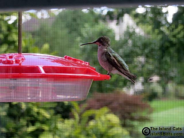 Hummingbird sitting on feeder