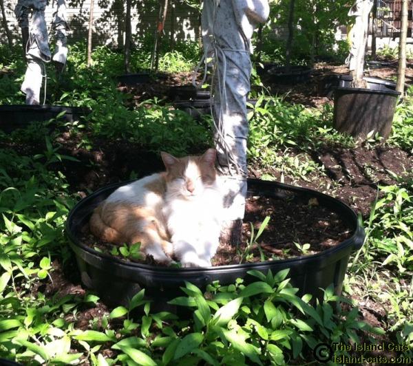 Chip sitting in pot