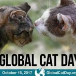 Global Cat Day 2017 - An Update on Chip & Slim, the Garden Center Cats