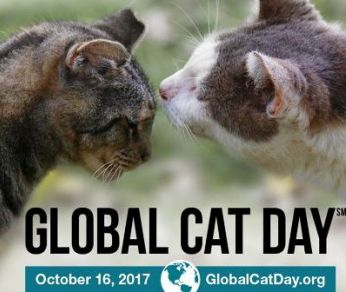 Global Cat Day