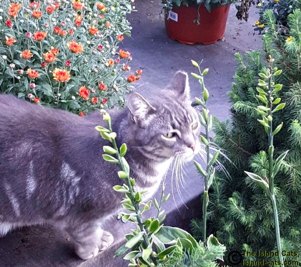 Slim checking out the plants