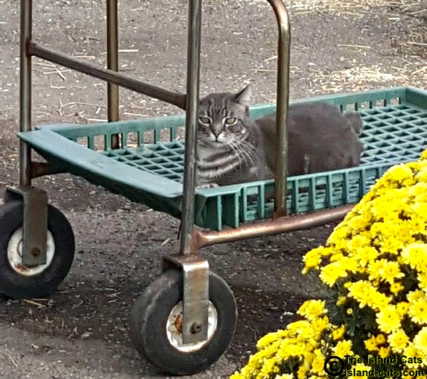 Slim sitting on cart