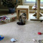 Messy Boy Cats