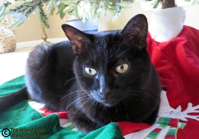 I'm under the Christmas tree