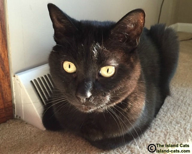 I'm keeping warm next to the heat vent