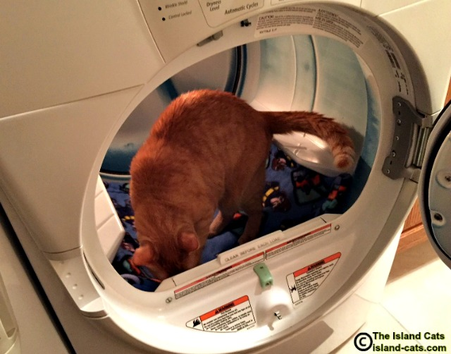 Cats should NOT be allowed in the dryer