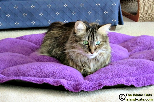 I'm relaxing on the Comfy Clamshell