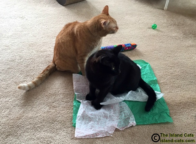 Don't take our tissue paper