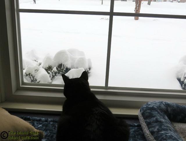 We got a lotta snow