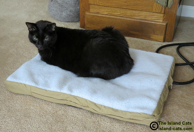 Ernie staying warm on the Art of Paws heated pet mat
