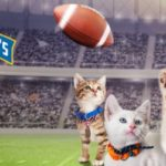 Easy E's Super Bowl and Kitten Bowl Selfie Sunday