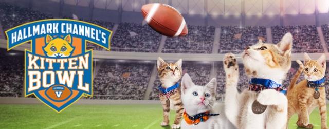 Hallmark Channel's Kitten Bowl V