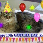 Happy Gotcha Day, Zoey...with Commentathon!