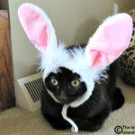 Easy E's Foolish Bunny Ear Selfie for Easter Sunday