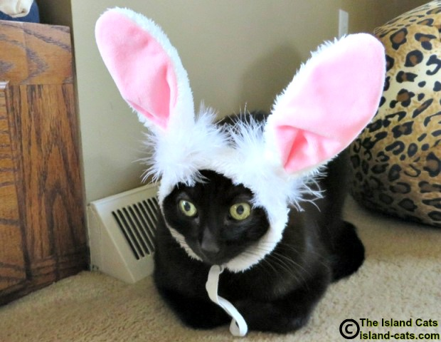 I'm not happy about wearing these bunny ears