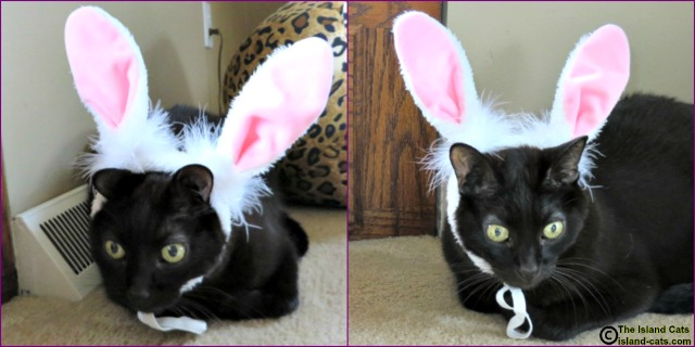 Bunny ear bloopers