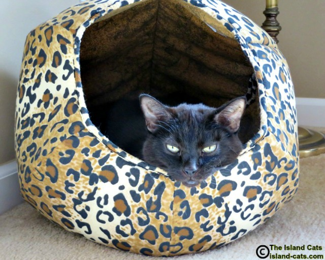 I'm chillaxing in my Cat Ball