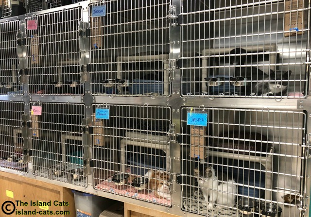 Cages at the shelter