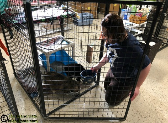 Feeding the cats at the shelter