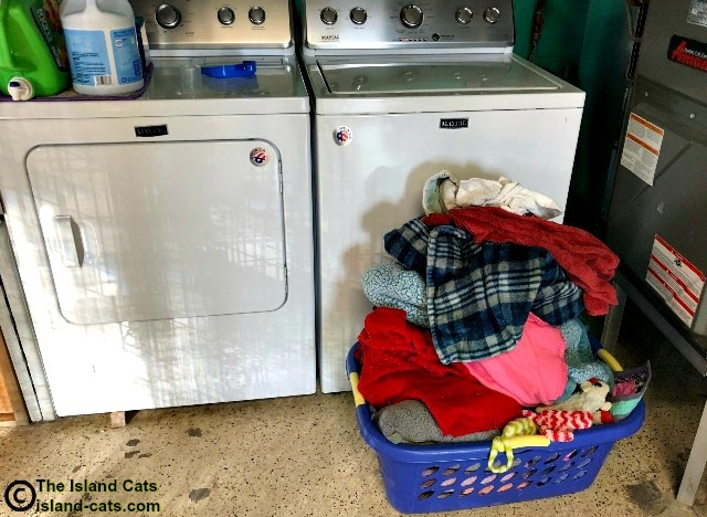 Laundry at the shelter