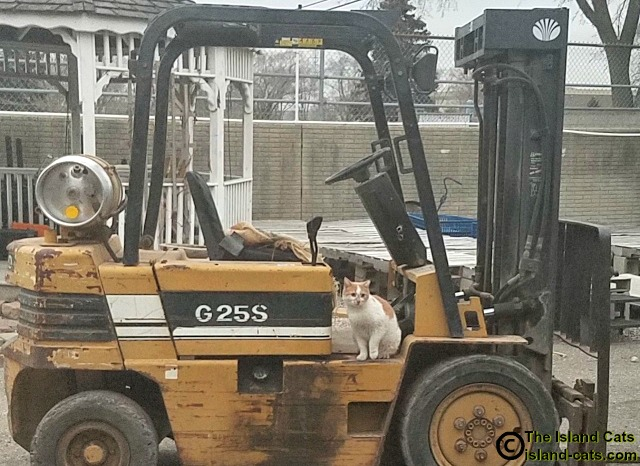 Chip is learning to drive the loader