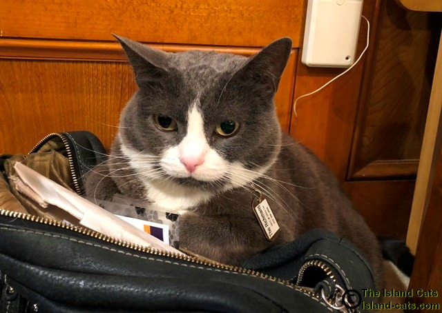 Allie sat on the bag