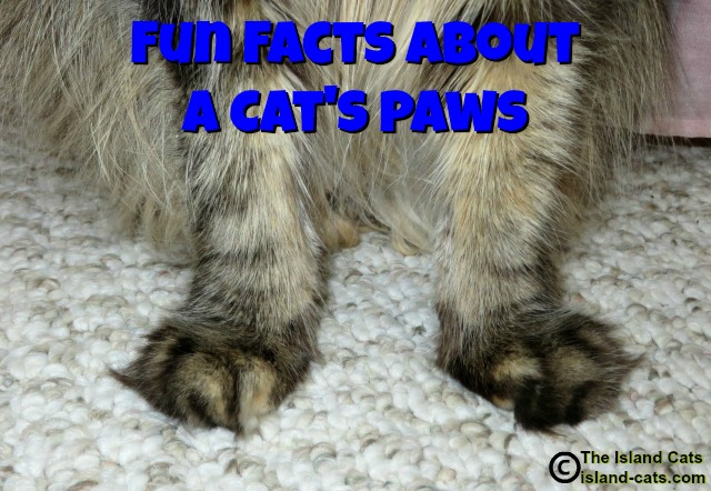 Fun facts about a cat's paws