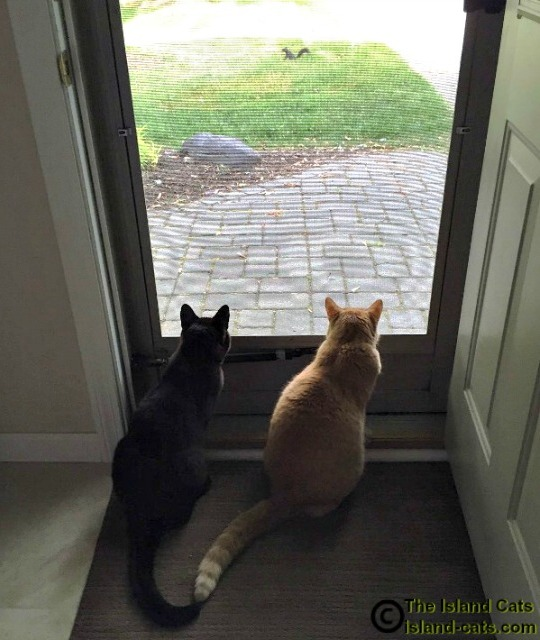 Cats watching a squirrel