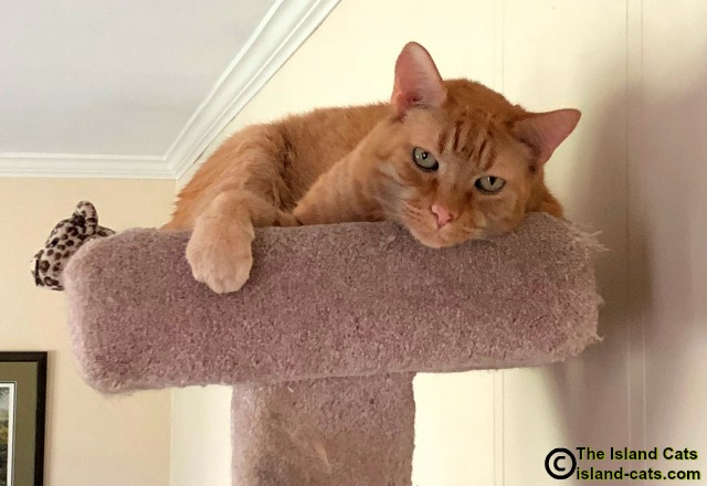 Wally-on-top-of-cat-tree