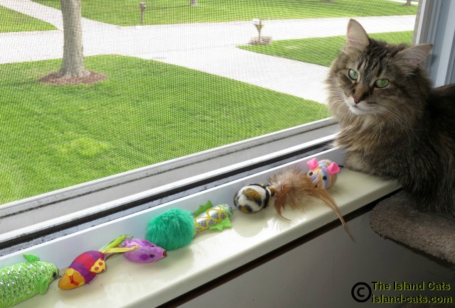Zoey and the line of toys