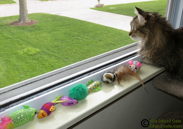 Zoey would rather look out the window than play with the toys
