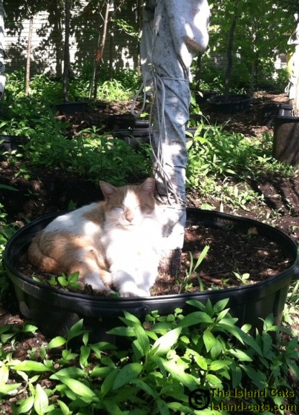 Cat sleeping in flower pot