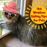 Summer's Here...Hot Weather Safety Tips for Pets