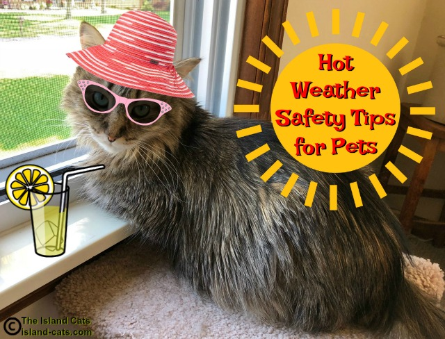 Hot weather safety tips for pets