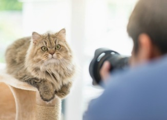 Photographer taking photo of cat