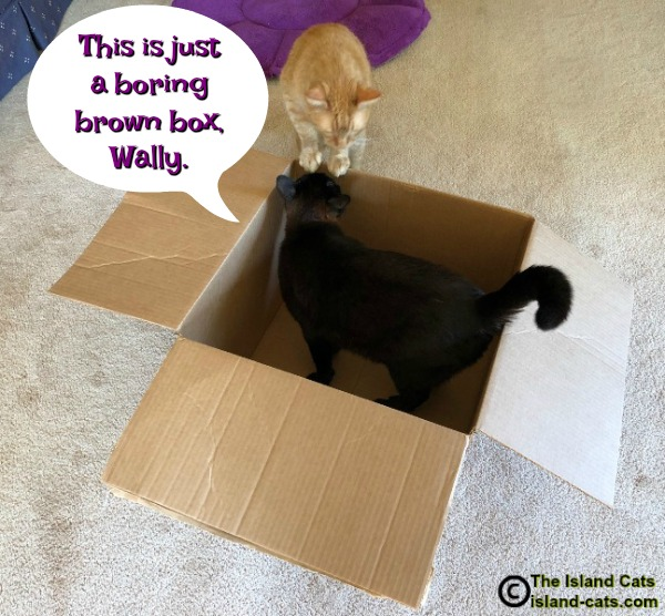 Two cats and a box