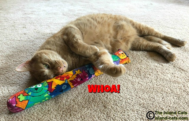 Cat with Kitty Kick Stix
