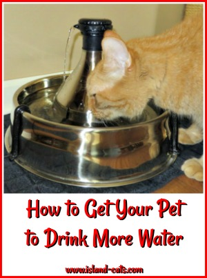How to get your pet to drink more water