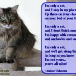 A Cat's Poem