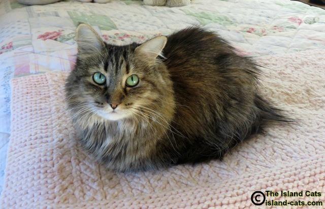 Catloaf
