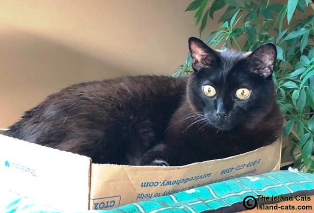 Cat laying in box