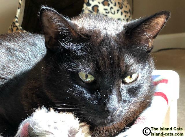 Black cat up close