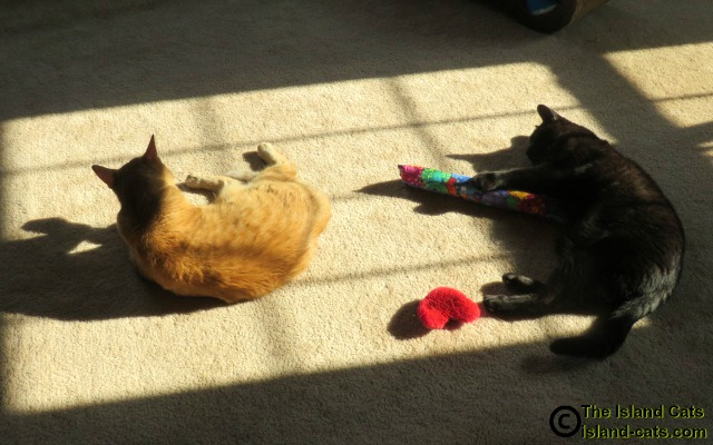 Two cats lying in the sun