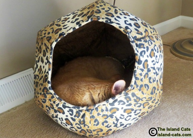 Cat sleeping in cat ball