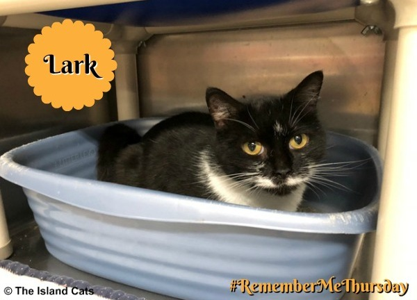 Lark - Wyandotte Animal Center