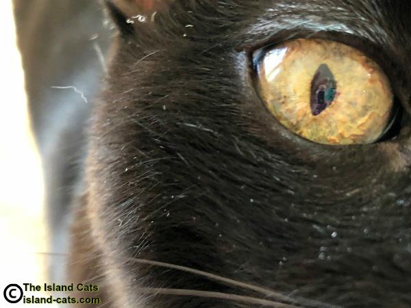 Cat's eye up close