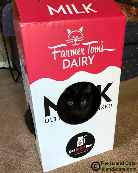 Cat in Cat in the Box milk carton